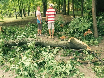 Велика гілка впала на алею в парку Шевченка у Чернівцях (ФОТО)