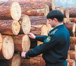Буковинський ліс експортують навіть до Панами