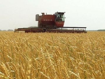 На Буковині зібрано врожай на 30 відсотках площ