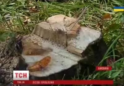Лісівників на Буковині звинувачують у незаконній вирубці лісу (ВІДЕО)