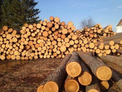 З початку року на Буковині чотири рази намагались незаконно вивезти ліс