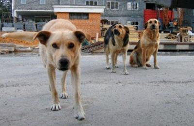 Безпритульних собак у Чернівцях знову стерилізуватимуть