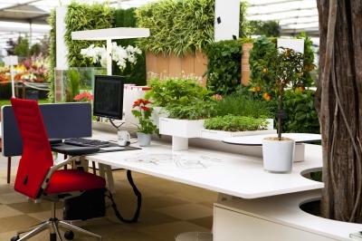Як впливають на здоров'я рослини у офісі