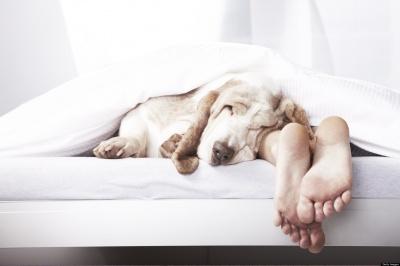 В якій позі спати найкорисніше