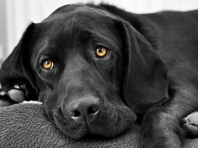 На Калинці в Чернівцях безкоштовно роздаватимуть собак і кішок