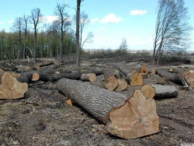 Яценюк заборонив неправомірну вирубку лісів на Буковині