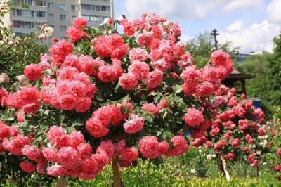 У понеділок на Буковині утримається суха погода