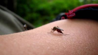 Кого обирають комарі
