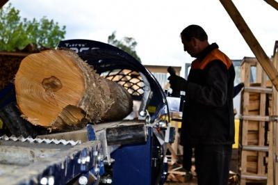 На Буковині шукають людей на посади керівників п'яти лісництв