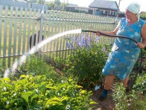 Через спеку на Буковині прогнозують великий недобір урожаю