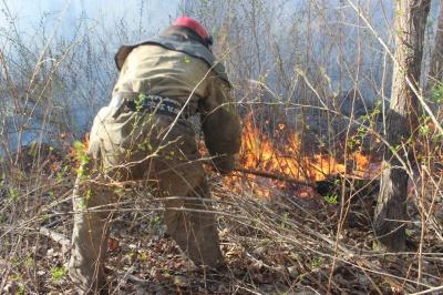 """У """"Чорнобильській пущі"""" знову почалися пожежі"""