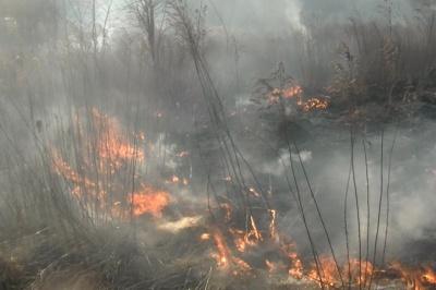 На Буковині горять гектари сухої трави
