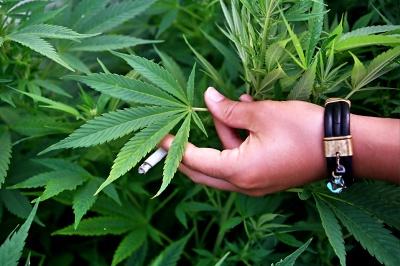 Яка дія марихуани на мозок