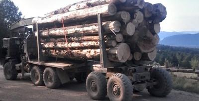 На Буковині СБУ затримало вантажівку з лісом без документів