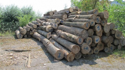 Через кордон на Буковині під виглядом хмизу везли діловий ліс