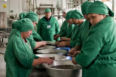На Буковині підприємство щодня виробляє по 20 тонн соку для Європи та США