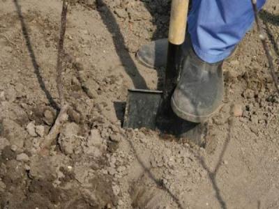 На Буковині вбили жінку і закопали неподалік дому