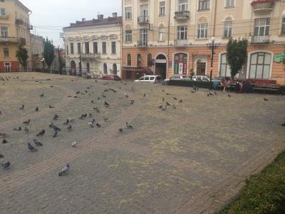 Площа Філармонії в Чернівцях заросла травою (ФОТО)