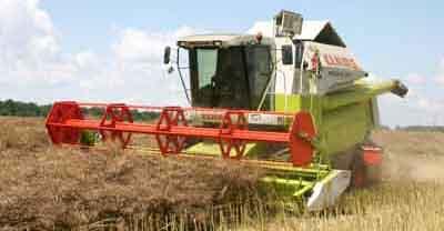 На Буковині більша урожайність зернових, ніж торік