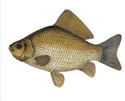 Учений з Буковини написав книгу про риб, якій нема світових аналогів