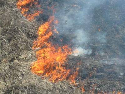 На Буковині фіксують найвищий рівень пожежонебезпеки