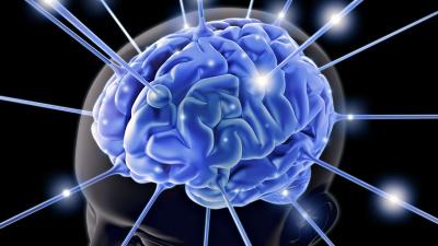 Мозок реагує на форму житлового приміщення