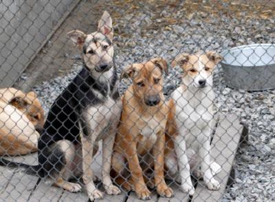 Стерилізаційний центр для тварин у Чернівцях збудують до кінця року