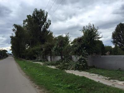У Садгорі обленерго обрізало дерева - прибрати за собою забули (ФОТО)