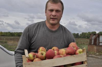 На Буковині урожай яблук удвічі менший, ніж торік