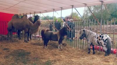 До Чернівців приїхав цирк з верблюдами і слоном (ФОТО)