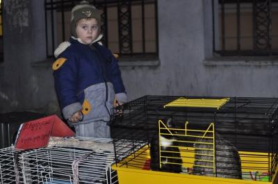 У Чернівцях кандидати піаряться на безпритульних тваринах