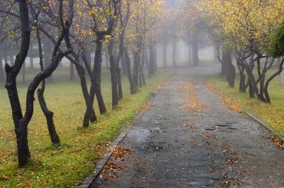 У вихідні на Буковині буде хмарно, вранці туман