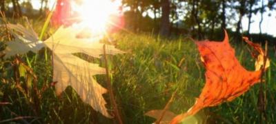 У Чернівцях наступного тижня обіцяють до 18 градусів тепла