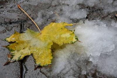 Зима буде теплою, а Новий рік синоптики обіцяють морозним і сніжним