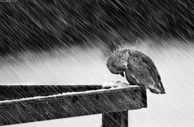 На Буковину йдуть дощі з мокрим снігом