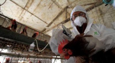 У Франції зафіксували спалах пташиного грипу