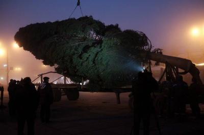 До Чернівців привезли головну новорічну ялинку міста (ФОТО)
