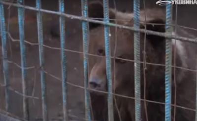 На Буковині лісники врятували ведмежа, яке гинуло від голоду