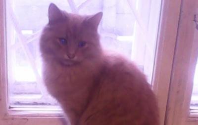 На Буковині чоловік врятував кота із колодязя