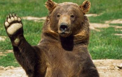 Дикий ведмідь на Буковині, який восени напав на грибника, заснув лише наприкінці зими