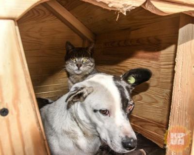 У центрі Одеси в одній будці разом живуть кіт і пес (ФОТО)