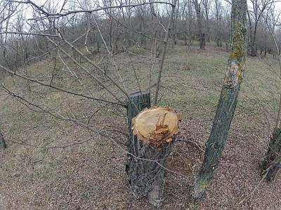 Чернівчанина у лісі вбило дерево, яке він спиляв