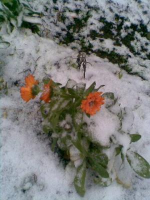 На Буковині ще будуть заморозки та мокрий сніг