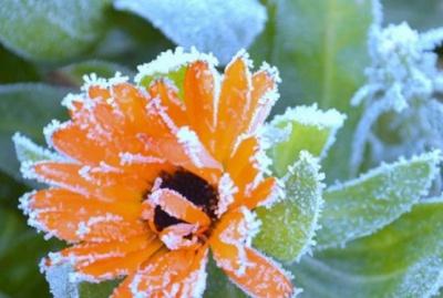 На Буковині похолодає: очікуються заморозки і мокрий сніг
