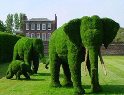 """""""Едельвейс"""": найкраще рішення для вашого саду (на правах реклами)"""