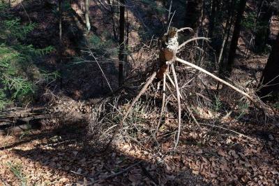 Щоб вивезти решту сухого лісу, знову хочуть зробити дорогу через водоспад на Буковині