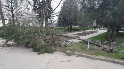 У Чернівцях  негода повалила кілька дерев