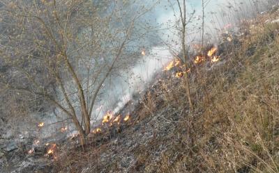 У Чернівцях через суху траву мало не згоріли склади