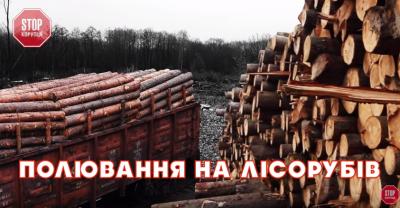 Прокуратура Буковини розслідує нищення лісів, показане журналістами