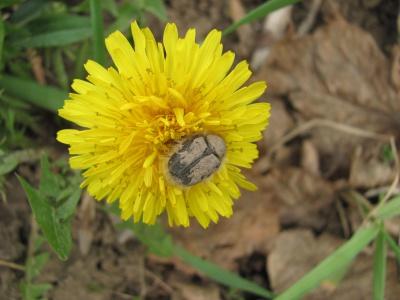 У Чернівцях у шкільному дендропарку буяє весна (ФОТО)